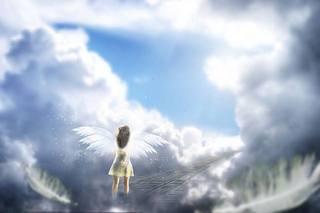 羽から翼へ