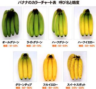 バナナの色によって健康効果がこんなに違う?!青バナナ?黄バナナ?茶バナナ?バナナの持つ力とは?!