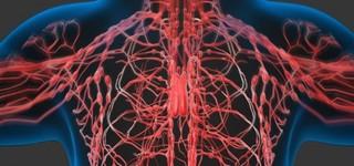 リンパ節の役割とは?なぜリンパ節にガンが転移すると命の危険にさらされるのか?!